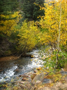 Color by the creek